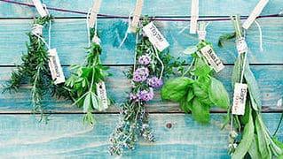 Anxiété – Stress – Se soigner avec les plantes