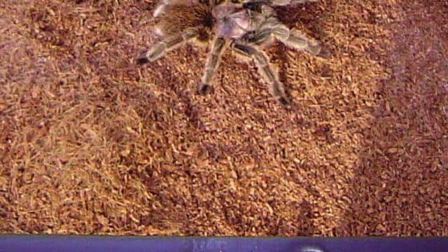 Arachnophobie et araignée géante – Exprimer sa peur