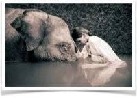 La douleur et l'humilité